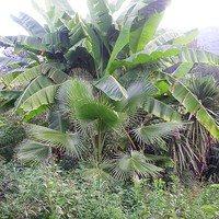 Пальмовый уголок