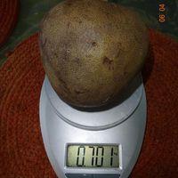 Вес плода анноны сетчатой