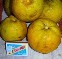 Апельсин Наранга агри