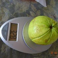 Плод гуайявыСорт Бланка