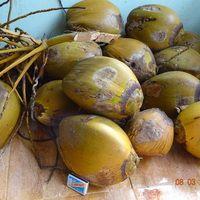 Кокосовые орехи,сорт