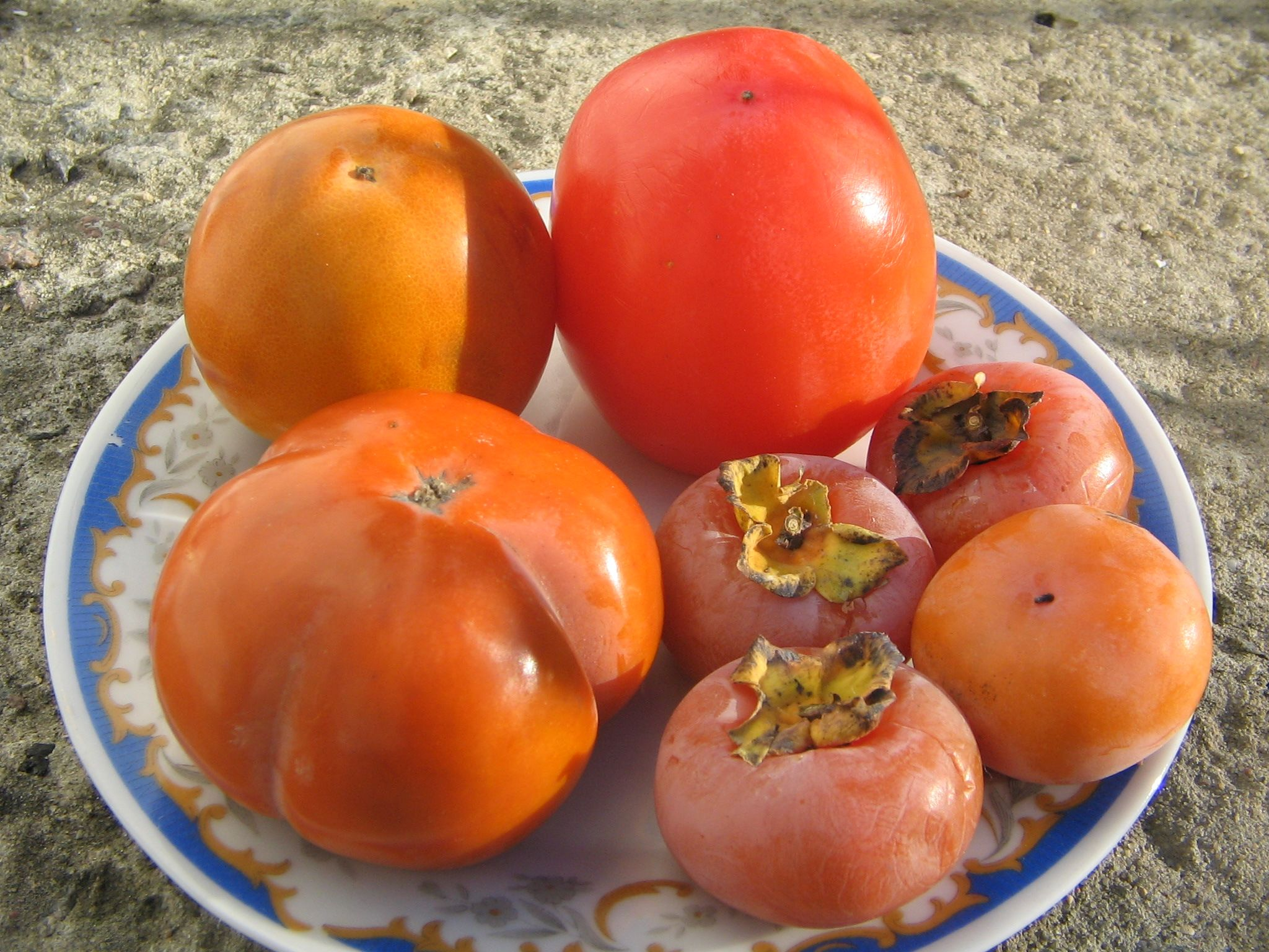 семена хурмы фото