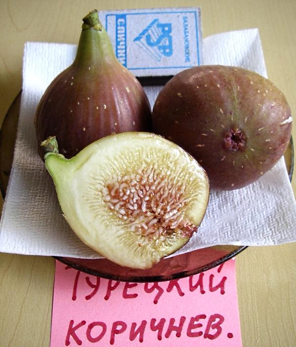 Инжир браун турки