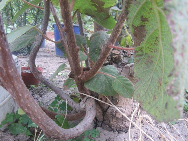 Выращивание в украине 19